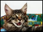 """AdamOre """"Hau?"""" (2004-09-19 12:09:05) komentarzy: 39, ostatni: najlepszy kot."""