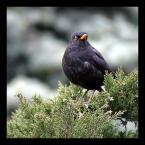 """DZID """"..."""" (2004-09-24 20:36:48) komentarzy: 35, ostatni: ale cudny ptak"""