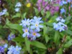 """kariola """"W błękicie"""" (2004-10-04 18:20:53) komentarzy: 13, ostatni: Śliczne kwiatki, ale szkoda, że nie bliżej. Pozdrawiam :)"""
