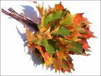 """matka_Wariatka """"rozszalala sie na dobre :) jesien"""" (2004-10-15 22:33:34) komentarzy: 104, ostatni: WYBITNE!"""