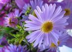 """kariola """""""" (2004-10-16 19:58:26) komentarzy: 91, ostatni: Owszem podoba mi się, aczkolwiek...im dłużej patrzę tym bardziej utwierdzam się w przekonaniu iż kwiat na pierwszym planie wygląda nienaturalnie...ale to MO. Pozdrawiam..."""