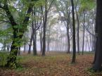 """paws """"mglisty"""" (2004-10-23 15:36:00) komentarzy: 8, ostatni: ładne leśne foto :) pozdrawiam"""