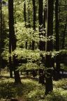 """Adam Skotarczak """"las wiosenny"""" (2001-06-03 21:31:32) komentarzy: 2, ostatni: Jeżeli to las bukowy to tam jet droga  jak byłem mały jezdziłem tam na rowerze."""