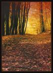 """Wołodytjowski """"Jesień w lesie"""" (2004-10-29 23:48:45) komentarzy: 26, ostatni: przyjemny las !"""