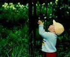 """irmi """"Być dzieckiem..."""" (2004-10-31 18:14:06) komentarzy: 19, ostatni: Bardzo tematyczna foteczka. Podoba mi sie."""