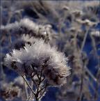 """algernon """"już wkrótce"""" (2004-11-02 17:47:17) komentarzy: 7, ostatni: ładne !"""