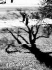 """albert broszka """"joshua tree"""" (2004-11-03 06:02:20) komentarzy: 3, ostatni: MACKI, Zło czyha za drzewem :)) kilka późniejszych Twoich fotek podoba mi się bardziej, ale i temu nie odbieram wysokiej rangi. bardzo z plusem"""