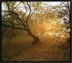 """black_bird """"jesienny poranek"""" (2004-11-15 21:36:20) komentarzy: 34, ostatni: Światełka"""
