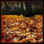 """Wołodytjowski """"Jesienny dywan"""" (2004-11-20 18:05:59) komentarzy: 20, ostatni: mmm :)"""