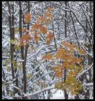 """bara """" jesień zimą"""" (2004-11-25 15:05:53) komentarzy: 18, ostatni: To co Jerzy poniżęj powiedział to prada, mi też się b. podoba  :) Pozdrawiam"""
