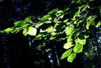"rembrant ""Las Caryński"" (2004-12-01 21:56:21) komentarzy: 0, ostatni:"