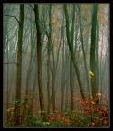 """Wołodytjowski """"Las przed snem"""" (2004-12-05 20:58:14) komentarzy: 25, ostatni: Fajny lasek z tą mgiełką :)"""