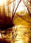 """Maciek Bialas """"Rzeka"""" (2004-12-21 15:05:46) komentarzy: 4, ostatni: bardzo cieplutkie :) yellow river, yellow river - makreli smak to......... ihihihi"""