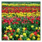 """Anka """"Trochę wiosny..."""" (2004-12-22 17:00:03) komentarzy: 35, ostatni: przemyślane i dobrze wykorzystany temat"""