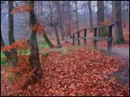 """kariola """"Zatrzymaj się na chwilę, w bukowym gaju, na brzegu jeziora ..."""" (2004-12-25 15:46:47) komentarzy: 137, ostatni: klimatyczne kolory ..."""