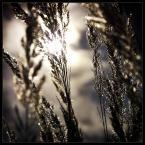 """LinKuei """"Jesiennie..."""" (2005-01-02 19:44:47) komentarzy: 22, ostatni: bezbłedne! takie mieć na ścianie! :) z ciekawości wiał wtedy wiatr?"""