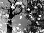 """albert broszka """"liście na drzewie"""" (2005-01-12 20:05:55) komentarzy: 2, ostatni: Pomysł b. ciekawy :) Trzeba było ostrzyć na drzewo i mocno przysłonić obiektyw. Drzewo wyszłoby ostre, a i listki nie ucierpiałyby... Ogólnie fajne..."""