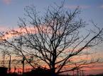 """ania wiech """""""" (2005-01-13 10:59:57) komentarzy: 2, ostatni: Trakcja elektryczna - drzewo - centrum - zachód słońca - bałagan - entropia - nie mogę zebrać myśli - źle nie jest - ale jakoś tak dziwnie :P"""