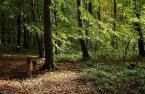 """Antoni Dziuban """"Jesienny spacer"""" (2002-11-10 12:04:10) komentarzy: 26, ostatni: Ladny klimacik, az sie chce sloneczka i lasu. Pozdrawiam :-)))"""