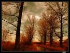 """Emiil """"WISZNIA"""" (2005-01-20 23:13:47) komentarzy: 30, ostatni: piękne te rudości :)"""