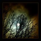"""Wołodytjowski """"Światło nocy"""" (2005-01-27 01:28:58) komentarzy: 23, ostatni: stworzyłeś doskonały i zarazem niesamowity nastrój , pomimo że kadr jest prosty w wymowie !"""