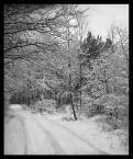 """diablik """"zimowy landszafcik"""" (2005-01-31 22:24:58) komentarzy: 13, ostatni: bdb.pozdrawiam"""