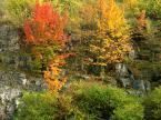 """Slawcio1 """"To była jesień..."""" (2005-02-08 15:02:44) komentarzy: 9, ostatni: tylko kolor nic więcej 8-("""