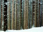 "BALTORO ""zimowy lasu sen..."" (2005-02-09 07:13:53) komentarzy: 8, ostatni: super!:)"