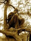 """nomaderro """"eFdoAdoJotdoA"""" (2005-02-10 14:28:51) komentarzy: 12, ostatni: smiem twierdzic ze jednak modrzew! (i nie jestem diablem) ;) pozdro!"""