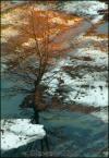 """SławeK WaW """"Drzewo zimą"""" (2005-02-17 20:37:44) komentarzy: 6, ostatni: Nie wal logo na obrazek. I to takie wielkie. Nie ukradną go. Są lepsze"""