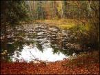 """Anavera """"Impresja nad leśnym jeziorem."""" (2005-02-21 08:49:13) komentarzy: 9, ostatni: ...urokliwe...komarzaste pewnikiem"""