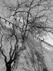 """mariol """"wieczność"""" (2005-03-03 10:34:47) komentarzy: 7, ostatni: Swietny kadr.!Piekne foto wawelu.B.dobra jakosc. :-)))"""