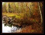 """Anavera """"Leśne dzikie jezioro"""" (2005-03-07 12:41:40) komentarzy: 18, ostatni: lubię takie klimaty"""