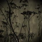 """michalrebilas """"badylki"""" (2005-03-07 19:37:36) komentarzy: 30, ostatni: oj ładne ładne"""