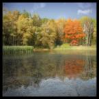 """DELF """"sen"""" (2005-03-18 15:33:55) komentarzy: 109, ostatni: piękne.... i klimatyczne:)"""