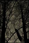 """fl0r """"Podobno pawie śpią na drzewach..."""" (2005-03-26 22:46:06) komentarzy: 5, ostatni: ano paw, który poniekąd jest dodatkiem"""