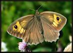 """Slawcio """"zeszłoroczny"""" (2005-04-03 00:02:29) komentarzy: 10, ostatni: Piękne kolory , bardzo czyste foto - pozdrawiam serdecznie"""
