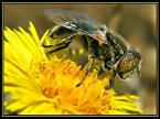 """Slawcio1 """"Wiosenny wypas"""" (2005-04-08 13:44:10) komentarzy: 7, ostatni: Makro wypas - pozdrawiam serdecznie"""
