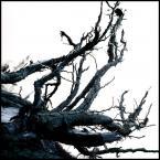 "kiwer "".touching the void."" (2005-04-11 00:15:27) komentarzy: 15, ostatni: pojechane. kolor najs:)"