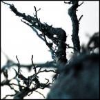 """kiwer """".touching the void."""" (2005-04-16 21:39:17) komentarzy: 10, ostatni:      """