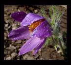 """Elżbieta """"kropelkami deszczu namaluj mnie..."""" (2005-04-17 21:31:07) komentarzy: 46, ostatni: niesamowity  dawno nie zagladalam a tu takie pieknosci przeoczylam :D"""