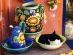 """borQT """"se leżę"""" (2005-05-04 15:20:23) komentarzy: 19, ostatni: Chciałoby się wleźć do dzbana, co? Proponuję """"wazon"""", (ten duży dzban, """"amforę""""). W tym przypadku Szanowny Kot da radę...:{P"""