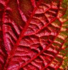 """anfo """""""" (2005-05-06 19:55:17) komentarzy: 15, ostatni: nie sztuka zachwycać się bukietem w wazonie - dostrzec subtelność, urok, zadumę, ogień w kawałku liścia, płatka - to jest dopiero sztuka. Wracam właśnie z Twojej galerii i oczywiście będę do niej często zaglądać, jeśli pozwolisz. Pozdrawiam!"""
