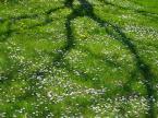 """paws """"dywanik"""" (2005-05-08 12:56:07) komentarzy: 10, ostatni: moje ulubione zdjęcie.... piekne! a kwiatki .. mlecze i stokrotki... moje ukochane!! no suuuper zdjęcie....."""