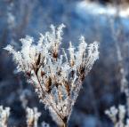 """Antoni Dziuban """"Śnieżny kwiat"""" (2002-12-27 20:43:13) komentarzy: 31, ostatni: Ładne. Można by przykadrowac z prawej i od góry."""