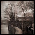 """DELF """"wiek miejskich drzew"""" (2005-05-26 15:01:04) komentarzy: 78, ostatni: Ciekawe ujęcie z tamtego miejsca. Pozdrawiam"""