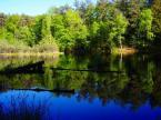 """Anavera """"Donica - leśne jezioro z pływjącą wyspą."""" (2005-05-28 12:10:00) komentarzy: 23, ostatni: pływająca wyspa tzn. pło ? (naturalna, powstała przez zarastanie)"""