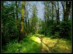 "Marcin Z ""Las"" (2005-05-29 00:57:34) komentarzy: 6, ostatni: ładne kolory, sielsko..."