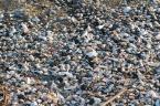 """hex """"""""Czarno - białe"""" znad morza"""" (2005-06-01 11:28:01) komentarzy: 17, ostatni: oki - zobacz moje"""