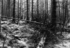 """CiasteczkowyPotwór """"Drzewo... umiera jak fatalna gałaź..."""" (2005-06-03 19:32:00) komentarzy: 5, ostatni: uwielbiam jak zdjęcie ma klimat... extra"""